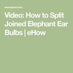 Video: How to Split Joined Elephant Ear Bulbs   eHow