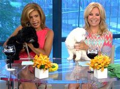 For Kathie Lee Gifford and Hoda Kotb, any day is Take Your Dog to Work Day Lollypop Farm, Kathie Lee Gifford, Hoda Kotb, Morning Show, Maltipoo, Tamron Hall, Pets, Paw Prints, Dog