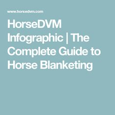 HorseDVM Infographic   The Complete Guide to Horse Blanketing