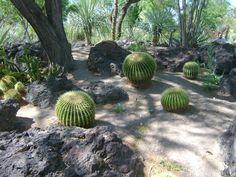 The Cactus Garden, Las Vegas