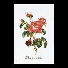 Rose Redouté