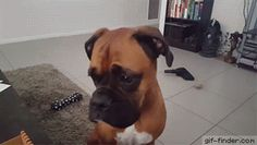 Dog dropping subtle hints   Gif Finder – Find and Share funny animated gifs