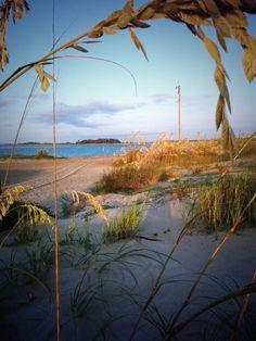 Sea Oats on Tybee Island, come take a walk on the beach! www.VisitTybee.com