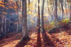 Autumn in Crimea by Denis Belitsky on 500px