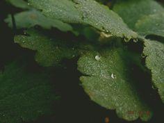 krople deszczu..