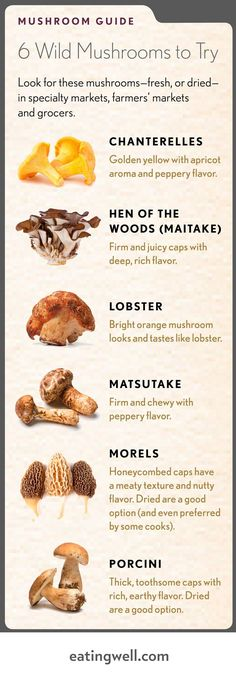 Our favorite wild mushrooms plus recipes.You can find Mushroom hunting and more on our website.Our favorite wild mushrooms plus recipes. Edible Wild Mushrooms, Growing Mushrooms, Stuffed Mushrooms, Culture Champignon, Mushroom Guide, Mushroom Fungi, Chanterelle Mushroom Recipes, Wild Edibles, Edible Plants