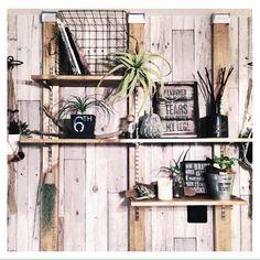 RAKUさんの、セリア,流木,いなざうるす屋さん,エアープランツ,観葉植物,ダイソー,100均,DIY,RC山口♡,ディアウォール,アロマディフューザー,棚,のお部屋写真