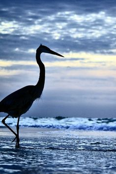 Bird in silhouette, Pensacola Beach, Santa Rosa Island, a barrier island in Escambia County, Florida, USA.