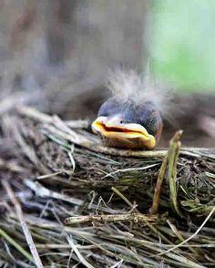 Little baby bird