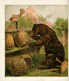 Bees:  Vintage illustration of a bear looting #bee #skeps of their #honey.