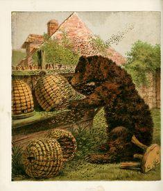 Bees:  Vintage illustration of a bear looting #bee #skeps of their #honey.