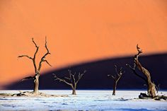 Some of deadvlei's dead trees which  are said to be a thousand years old, preserved in the arid climate and reflective of a time when a wetter climatic regime existed