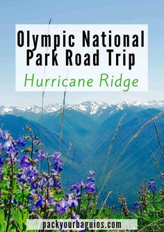 Olympic National Park Road Trip | Sequim, WA lavender farms | Hurricane Ridge | Marymere Falls | Lake Crescent | Lake Crescent Lodge