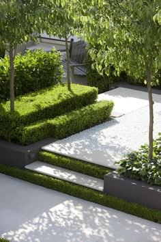 Less is more. Love the hedging, trees and beds in this elegant courtyard/garden.