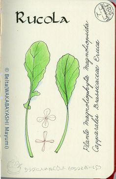 rucola_2014_11_09_01_s | rucola! love! for this drawing I us… | Flickr