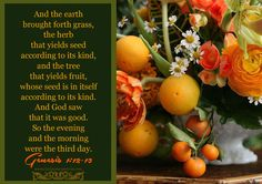 And the earth brought forth grass, the herb that yields seed according to its kind, and the tree that yields fruit, whose seed is in itself according to its kind. And God saw that it was good. So the evening and the morning were the third day. Genesis 1:12-13 <3