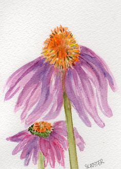 Echinacea  Purple Coneflowers Watercolor by SharonFosterArt, $20.00