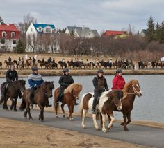 Reykjavik Horse Festival 2013