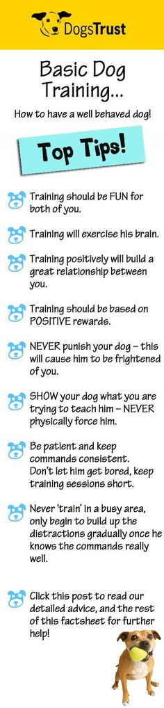 Training can be started at any age, the sooner the better. You can start simple training with your puppy as soon as he has settled into his new home! Follow our top tips for some grrreat ideas, on how to make your new canine companion the best behaved dog in the park! WOOF! @KaufmannsPuppy