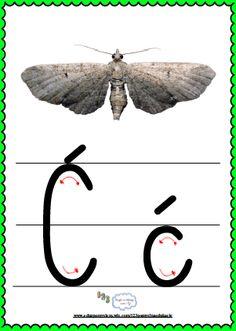 Litera Ćć- plansza demonstracyjna FREEEE Moth, Alphabet, Insects, Asia, Montessori, Animals, Yarns, Double Deck Bed, Animais
