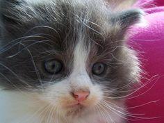 CUTE PICS PARADE | Cute kitten (3 pics)