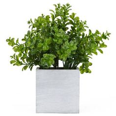 Potted Greenery - Bouclair Home Stylish Home Decor, Modern Decor, Branches, Bouclair Home, Pots, Front Steps, Queen Annes Lace, Window Coverings, Decoration