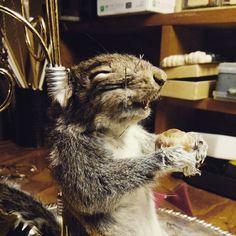 Happy little mummified squirrel at Wunderkammer Curiosity Shoppe