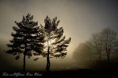 trees backlit