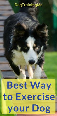 What are the best ways to exercise your dog? Find out why dog exercise is important, what kind of exercise you can do with your dog, and how much is enough? Read our article for some great tips on how to exercise your dog.