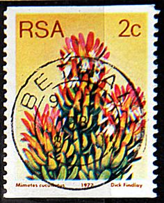 Republic of South Africa.  MIMETES CUCUFERUS.  Scott 493 A191, Issued 1977 May 27,  Photogravured, Perf. 14V, Coil Stamp, 2c.