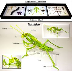 """Not technically """"nature"""" but nature-inspired: Taxidermied LEGO Insects - how freaking cool! I need them all."""