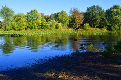 A pastoral, autumn scene at Silver Lake in early-October 2015.