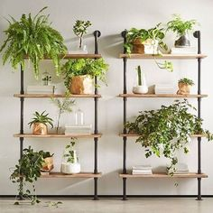 Increase Some Modern Day Design For Your Front Room With Art Deco Coffee Tables Paper Bags Decorating Over Plant Pots Look Good. 16 Diy Indoor Plant Wall Projects Anyone Can Do Living Wall Ideas For Home Balcony Garden Web Indoor Plant Shelves, Indoor Plant Wall, Indoor Plants, Shelves For Plants, Indoor Plant Stands, Garden Web, Diy Garden, Garden Design, Garden Ideas