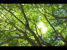 Relaxation Hymns 3 - YouTube