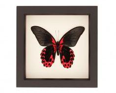 butterfly in frames