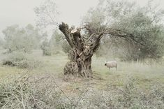 In Landscapes | iGNANT.de