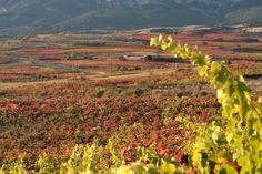 Septiembre es tiempo de vendimia en Rioja Alavesa https://www.vinetur.com/2014072116221/septiembre-es-tiempo-de-vendimia-en-rioja-alavesa.html