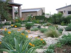 Simple xeriscape designs amazing casual easy going xeriscaped lawn alternative in ca dry gardengarden workwithnaturefo