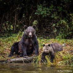 #EarthOnLocation by Paul Williams @Iron_ammonite filming BBC Secrets of Our Living Planet.  This part of British Columbia is aptly named the great bear rainforest because other than being a home to grizzly bears - it can rain a lot. We were there to film bears catching salmon as millions of them swim upstream to spawn. This is an essential source of nutrition before the bears can hibernate but seven days of heavy rain had increased the flow of the river and significantly delayed the salmons…