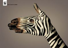 WWF Zebra by Guido Daniele
