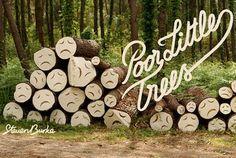 chop tree forest - Penelusuran Google