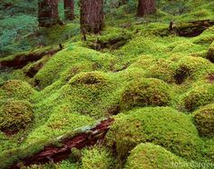 forest floor, Columbia River Gorge Mystical Forest, Columbia River Gorge, Forest Floor, Pacific Northwest, North West, Lush, Oregon, Golf Courses, Earth