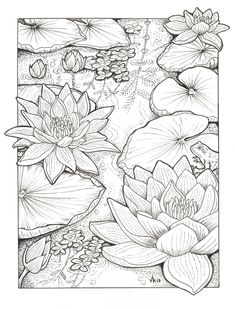 Habitats - Black & White by order - Coloring Pages ���� - . - Habitats – Black & White by order – Coloring Pages ���� – - Flower Coloring Pages, Coloring Book Pages, Coloring Pages Nature, Pattern Coloring Pages, Coloring Sheets, Pattern Drawing, Art Drawings Sketches, Tattoo Drawings, Fabric Painting