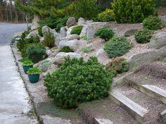 aménagement jardin de rocaille, plantes vertes, buis et marches e bois massif