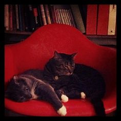 Two sleepy cats in one Eames chair. by thezenofmaking, via Flickr