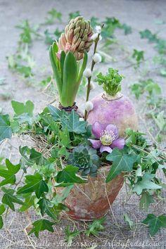 Gorgeous blog on gardening.  Not in English - yet incredibly inspiring.