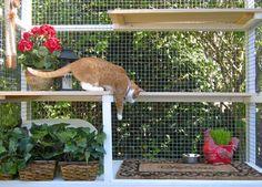 Catio Spaces - Diy Catio Plans And Cat Enclosures