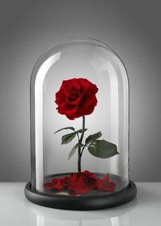 A marca Forever Rose é especializada em rosas de luxo que seguem o estilo da flor ícone do filme da Disney