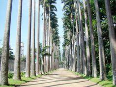 Jardim Botânico by Filipe Gropilo, Rio de Janeiro