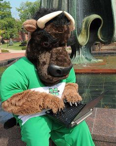Marshall University Thundering Herd - costumed mascot Marco the Buffalo - on computer checking class schedule
